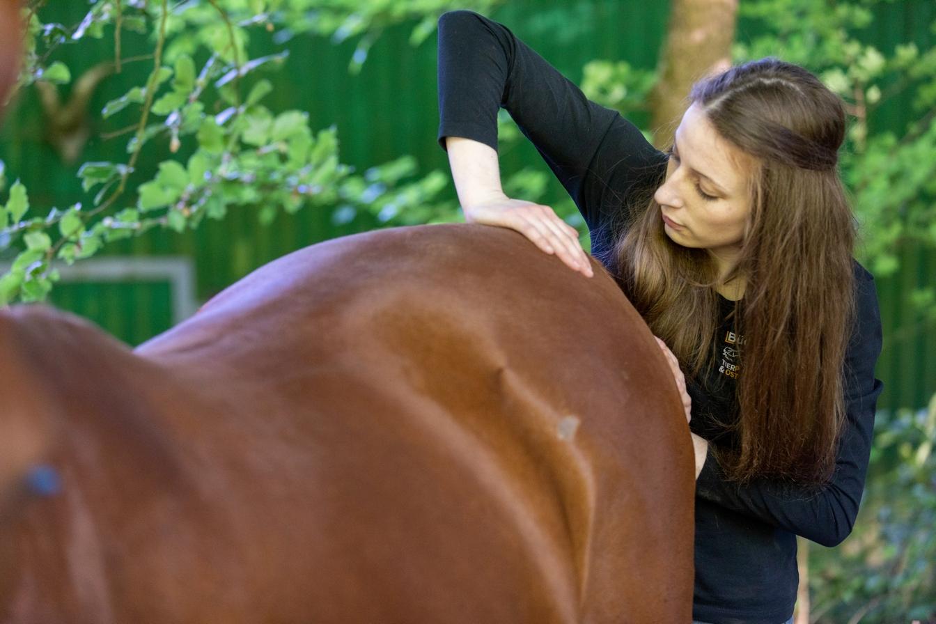 Tierosteopathie Lea Büdel Tiertherapie