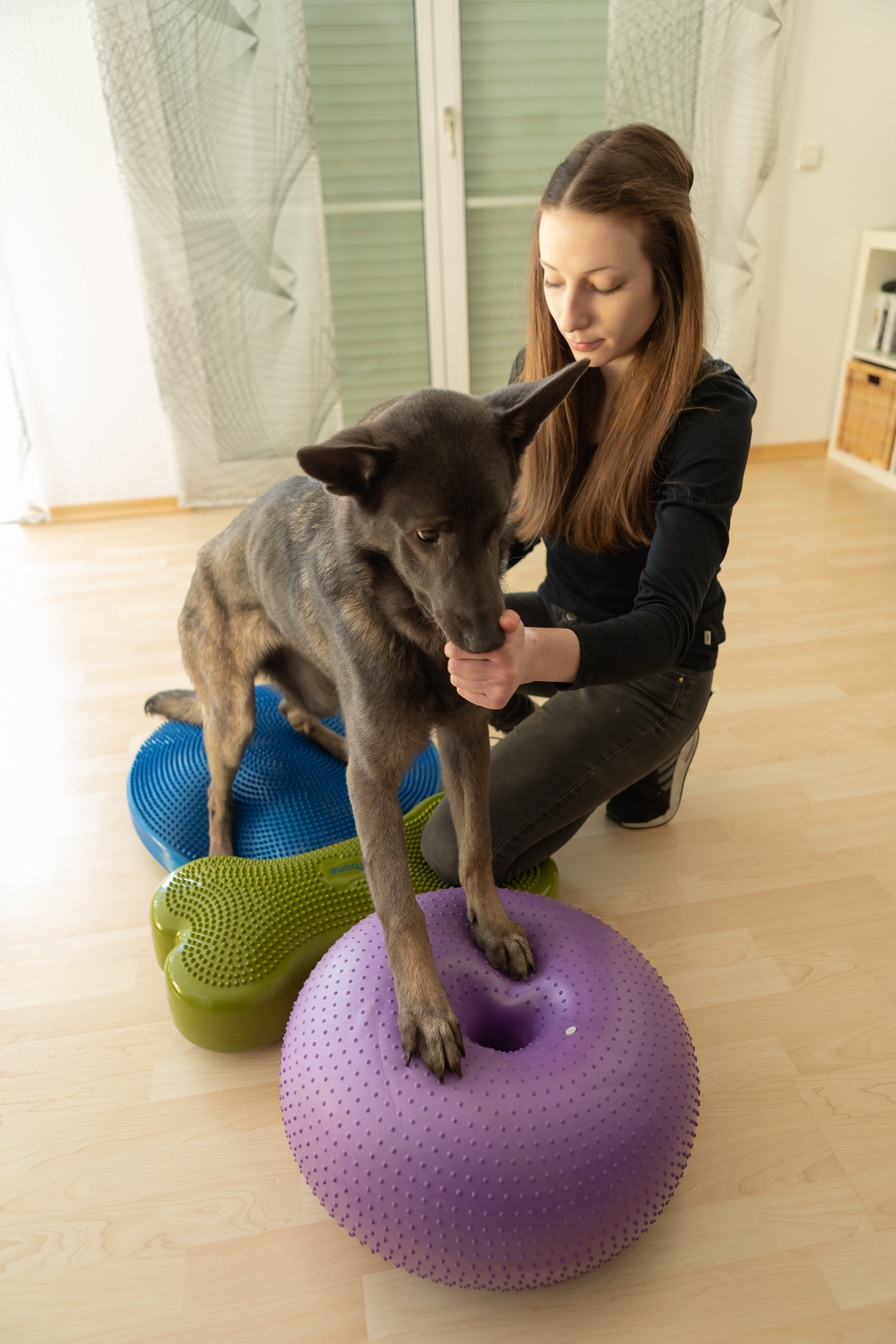 Balancetherapie Lea Büdel Tiertherapie