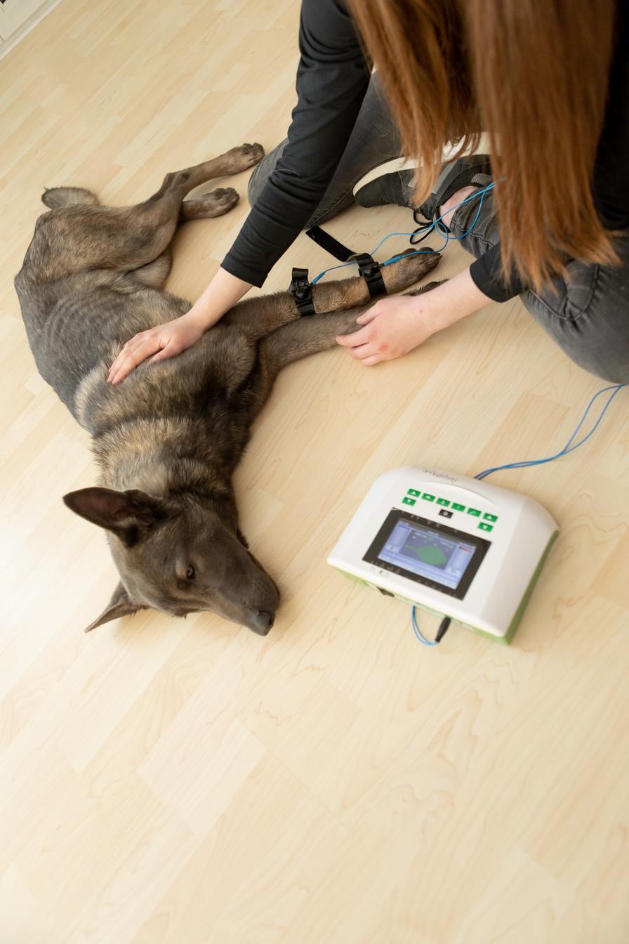Elektrotherapie Reizstrom beim Hund Tiertherapie Büdel