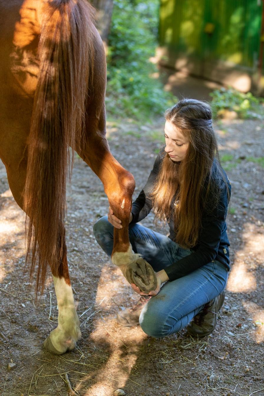 Lea Büdel bei der Arbeit Tierphysiotherapie und -osteopathie
