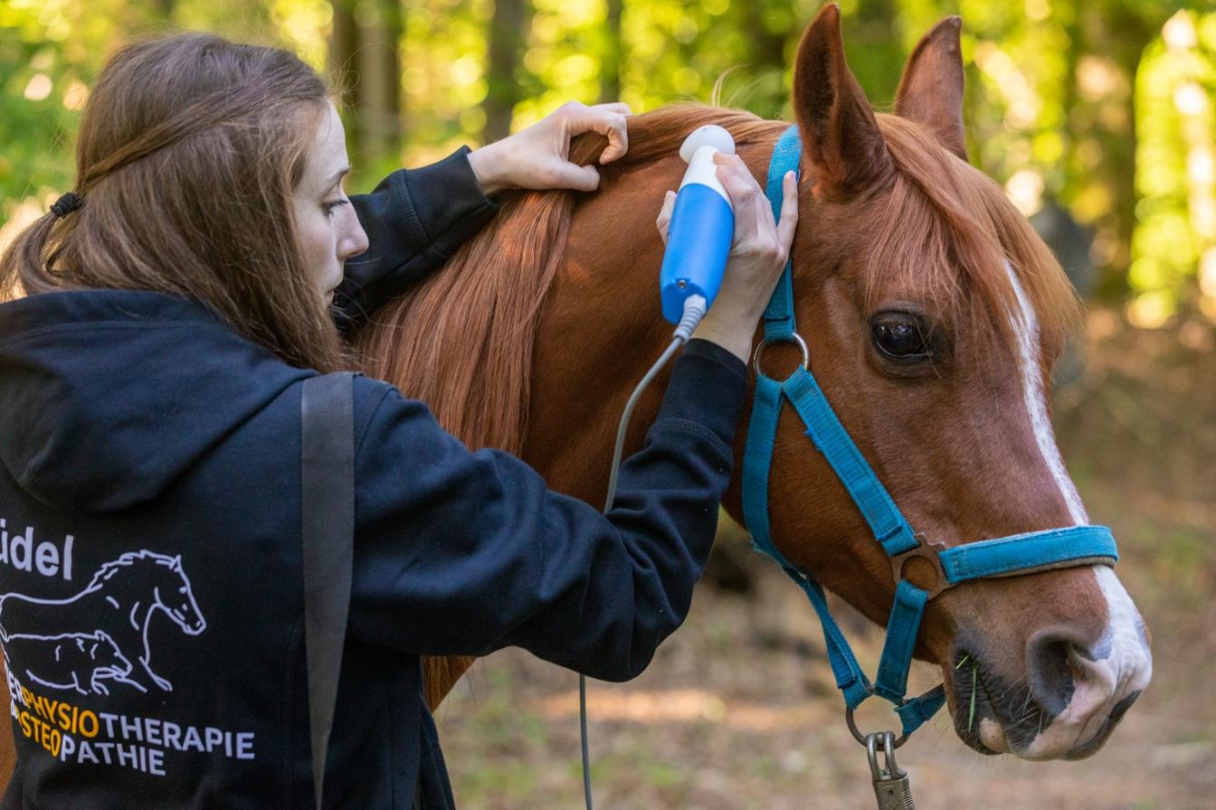 Neurostim Tiertherapie Büdel