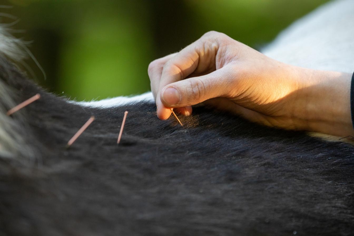 Dry Needling Tiertherapie Büdel